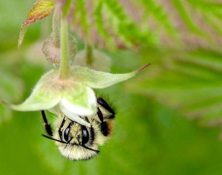 Bee-Felicia-Hallenbeck