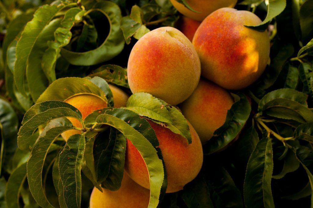 peaches-ian-baldwin