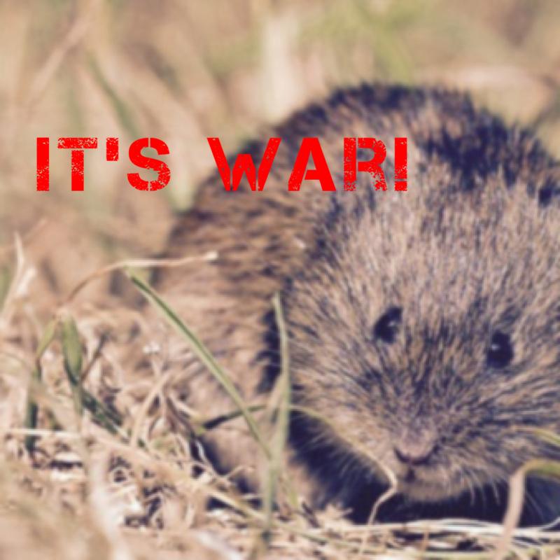Its War!